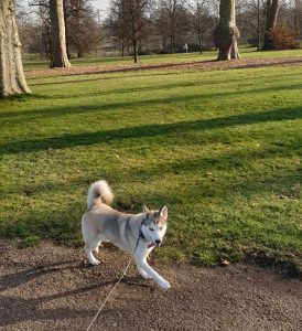 Dog Walking in the Hyde Park