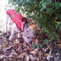 dog walker & activites