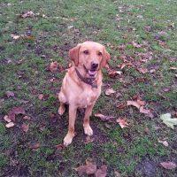 dog walking in Fulham