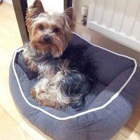 dog boarding in Chelsea