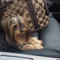 Pet Taxi Chelsea