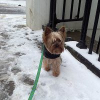 Snow in Chelsea