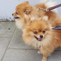 Pomeranian team in South Kensington