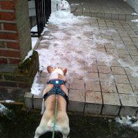 Meeting a Snowman
