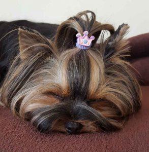 Doggy Daycare Clapham